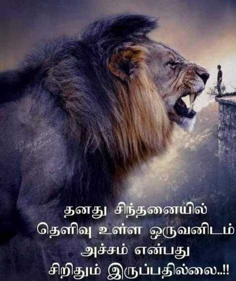 Thumbnail of Lion is Big Boss