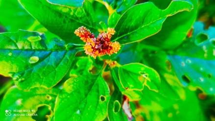 Thumbnail of Flower
