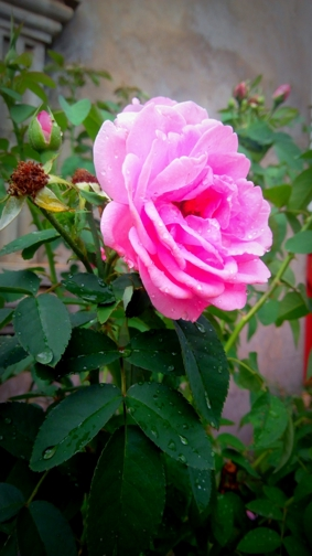 Thumbnail of Beautiful and natural flower